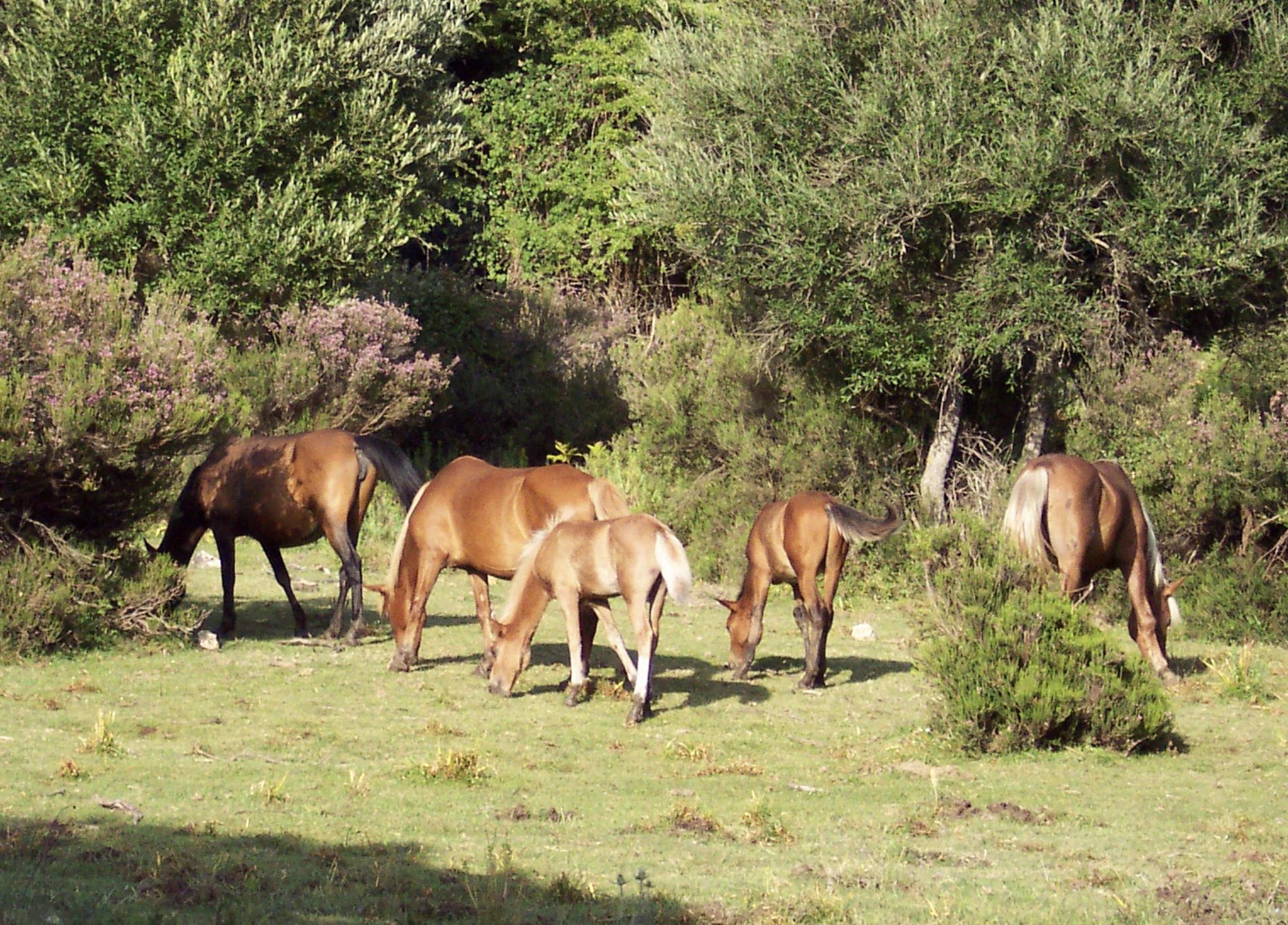 Nationaal Park Gennargentu