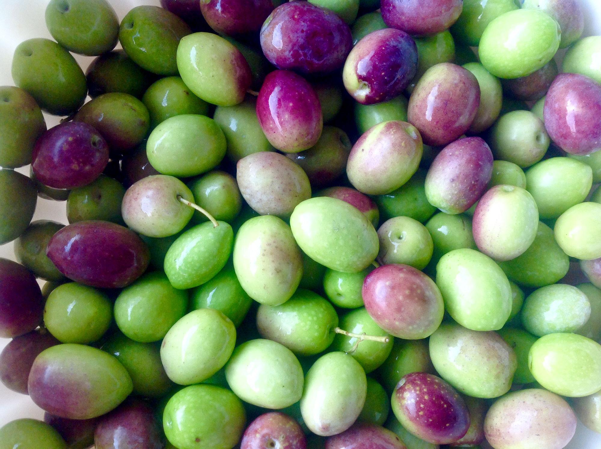 Van olijf tot olijfolie