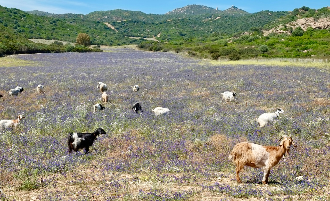 Voor- en najaar op Sardinië