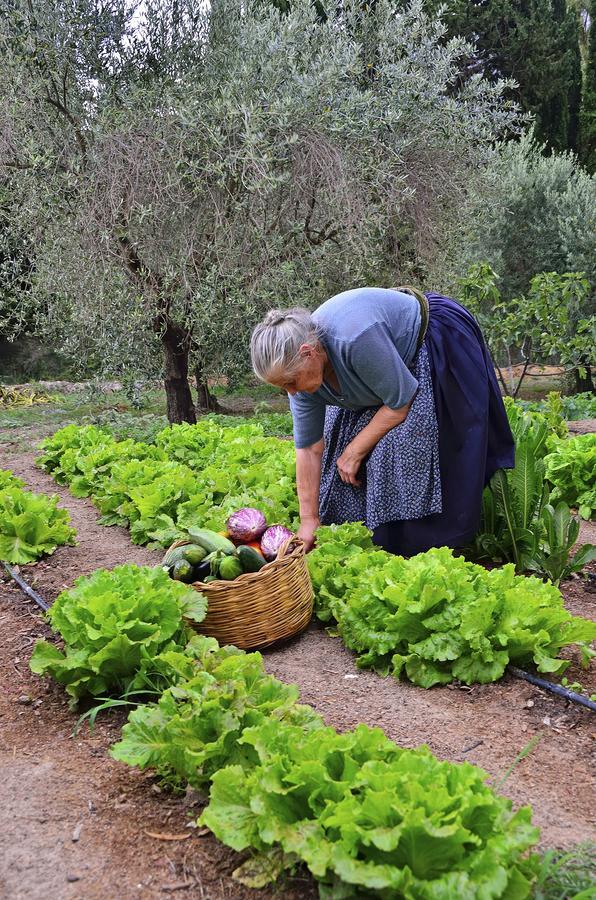 Agriturismo Guthiddai (oosten-binnenland) 15
