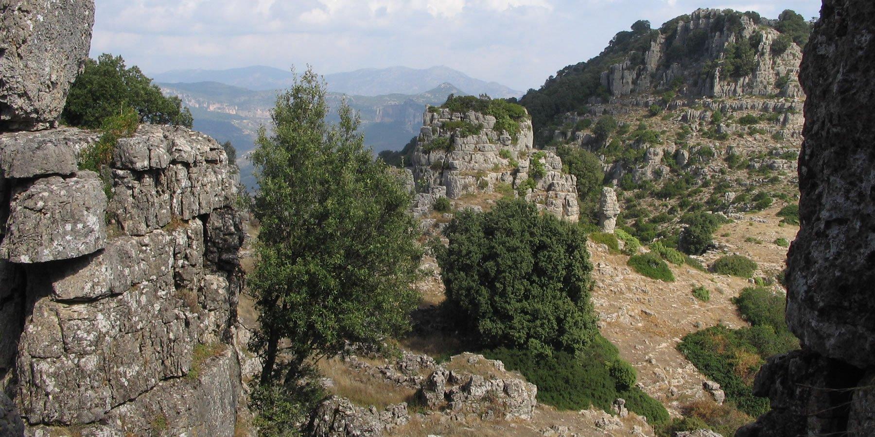 Borgo degli Ulivi (oosten) 24