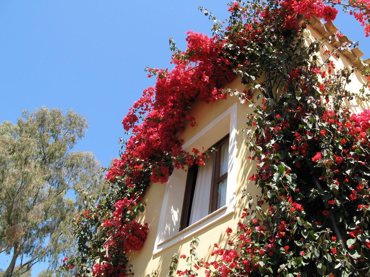 Borgo degli Ulivi (oosten) 19